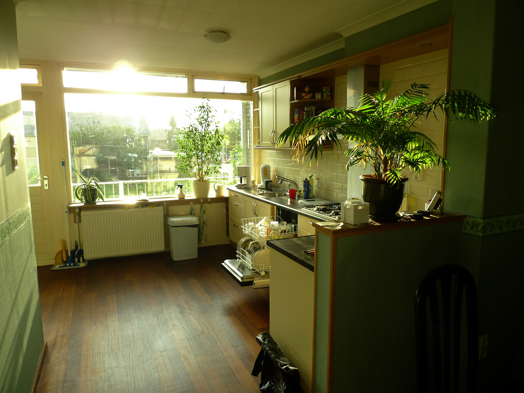 Choosing Condo Plants That's Best For You on Kitchen  id=77626