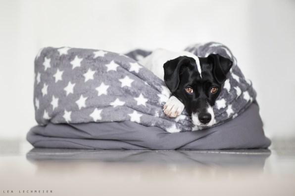 Kuschelhöhle - der Schlafsack für Hunde zum kuscheln