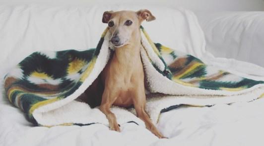 Schlafsack Hund happystaffy.me boho Inka Erfahrungen