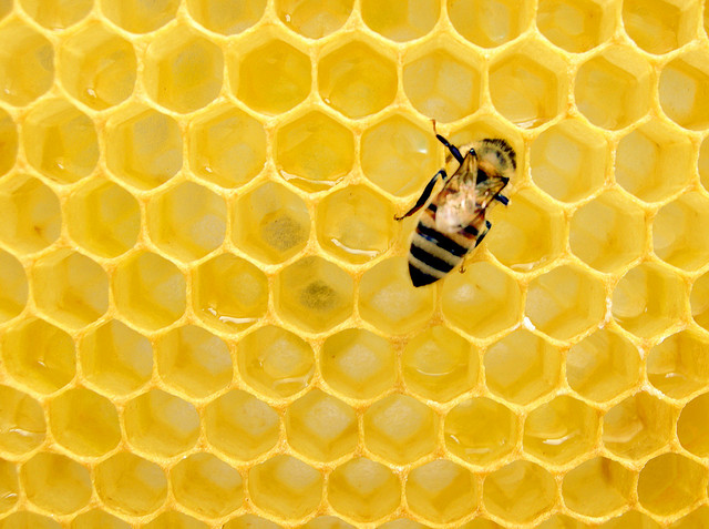 Building resilience: On the politics of pollination