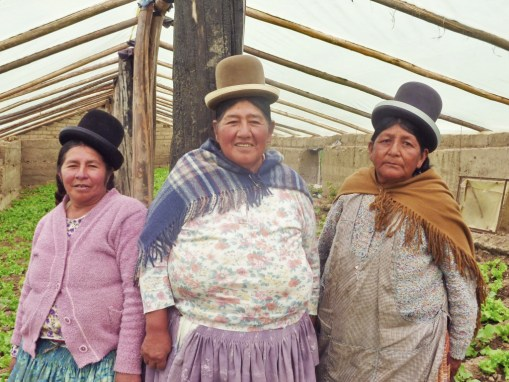 Aymara Women Vegetable Producers Association of Achocalla (AFLOPHA)