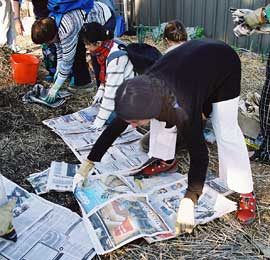The use of urban wastes, such as using waste newspaper as a mulch, would increase with any boost to growing food in our cities. Photo: Russ Grayson — Randwick City Council Sustainable Gardening course.
