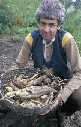 A gardener from the early days of the community garden displays a harvest of sweet potato.