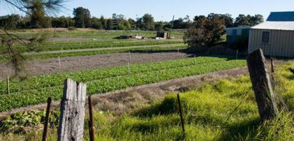 Urban-agriculture1