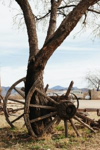 brown wooden carriage wheel near brown tree during daytime
