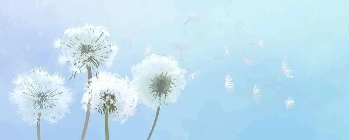 dandelion e