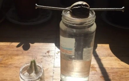 plant grow in water e