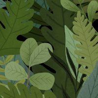 Home learning week 4 – Plants