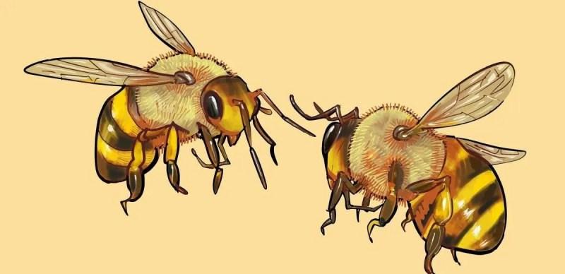 wasps e