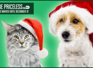 Pets are Priceless waived adoption fees