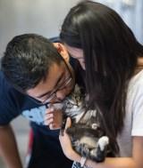 cat adopt