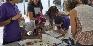 Families invited to participate in Wild Vizcaya on Feb. 9-10