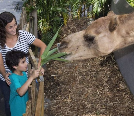 Zoo Miami voted among 10 Best Zoos in the USA