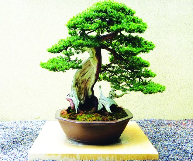 Learn The Art Of Bonsai At Pinecrest Gardens Miami S Community News
