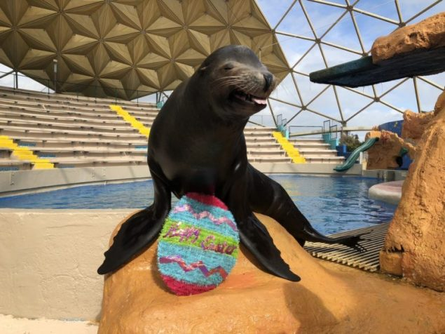 BunnyPalooza at Miami Seaquarium offers egg-citing Easter Weekend