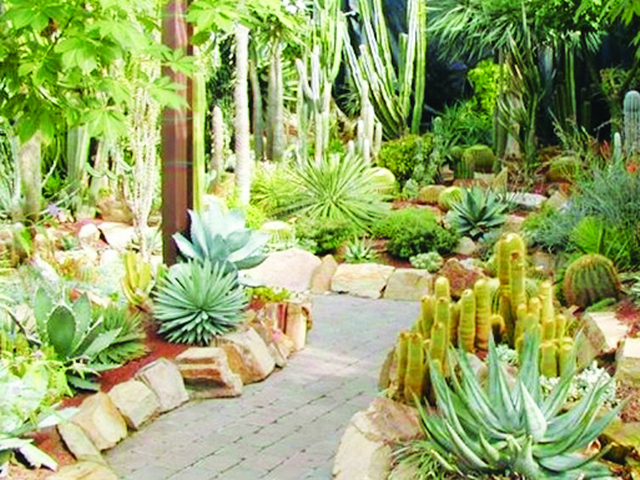 Cactuses and succulents are in full bloom