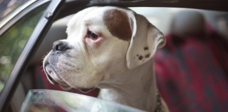 Five alternatives to consider before 'surrendering' your pet