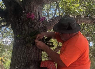 Orchid tracker app locates new plantings around city