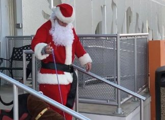 Santa escorts Miami-Dade shelter dogs north to find forever homes