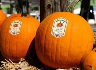 Try a 'No So Spooky,' but fun Halloween experience