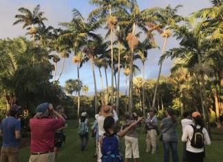 Tropical Audubon Ambassador Program reimagined for Fall 2020-Spring 2021
