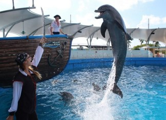 Miami Seaquarium reopens with new health guidelines