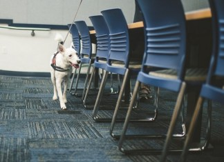 FIU is training dogs to detect COVID-19