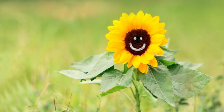 sunflower with smiling face