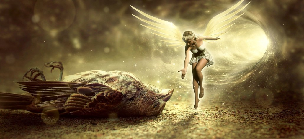 Dead bird with fairy