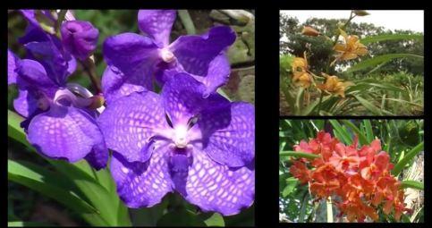como cultivar orquideas