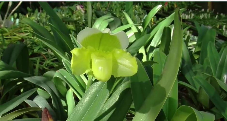 Como plantar orquideas cuidados tipos y consejos - Como cuidar orquideas en maceta ...