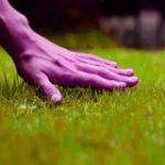 ¿Cómo plantar o sembrar césped?