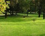 Cómo plantar grama en nuestro jardín