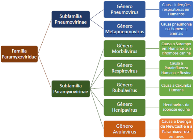 Família Paramixoviridae