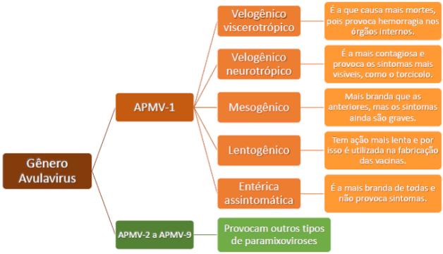 Gênero Avulavirus