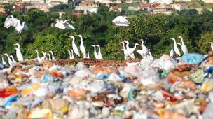 Pássaros no aterro sanitário, como descartar lixo de cozinha