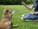 educando cachorro