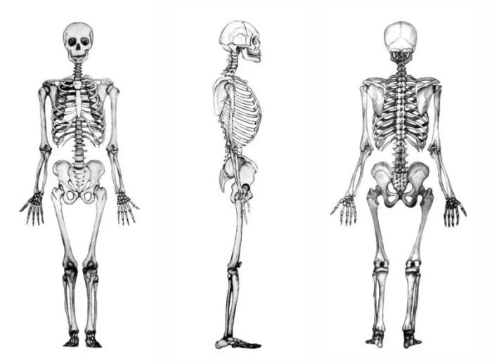 El esqueleto humano desde diferentes perspectivas