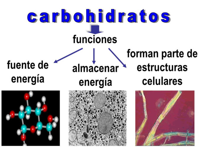 El glucógeno es la principal reserva de carbohidratos en el hígado, ya que da soporte a funciones muy importantes