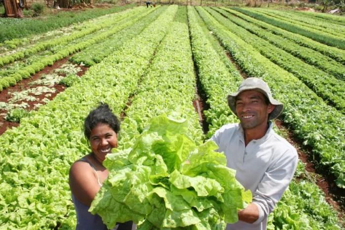 La fao se encarga de fomentar la agricultura, la pesca y la produccion de todas las regiones