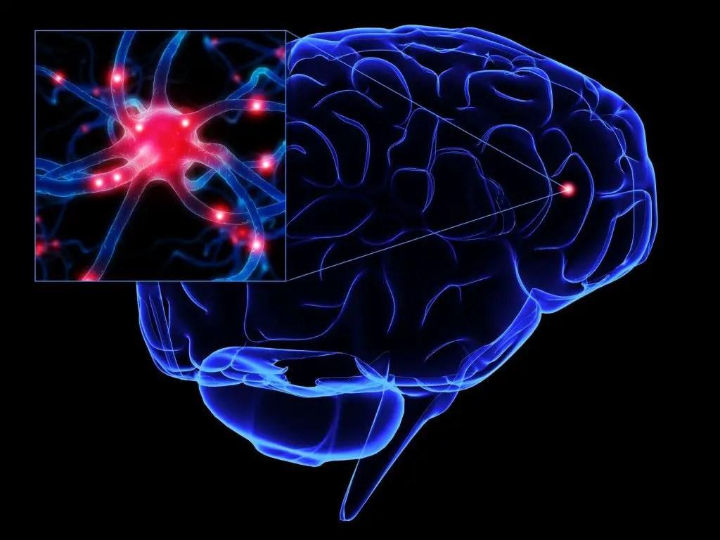 En qué otros lugares de nuestro cuerpo tenemos neuronas y para qué sirven