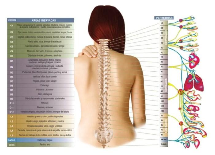 Descripcion detallada de cada una de las vertebras de la columna vertebral