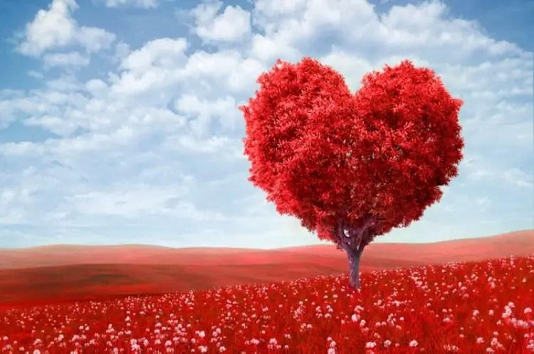 Qué es el amor? He aquí la ciencia