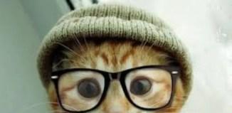 gatos entienden causa y efecto