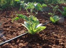 vegetales-3