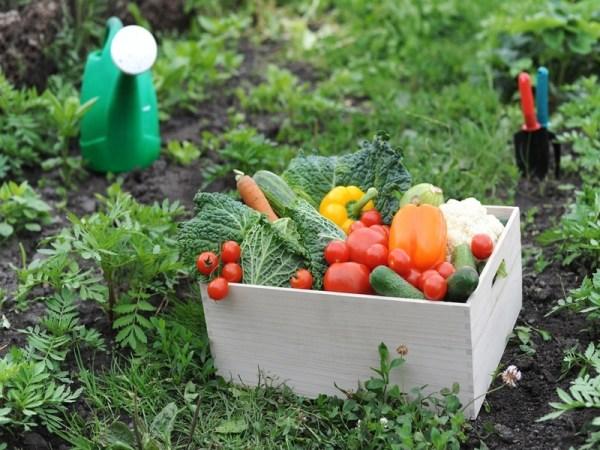 C mo sembrar vegetales en casa c mo lo puedo hacer for Cultivo de verduras en casa