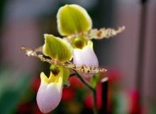 Cómo y cuándo repotear una orquídea