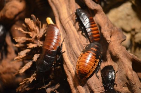 Cómo preparar un repelente de insectos