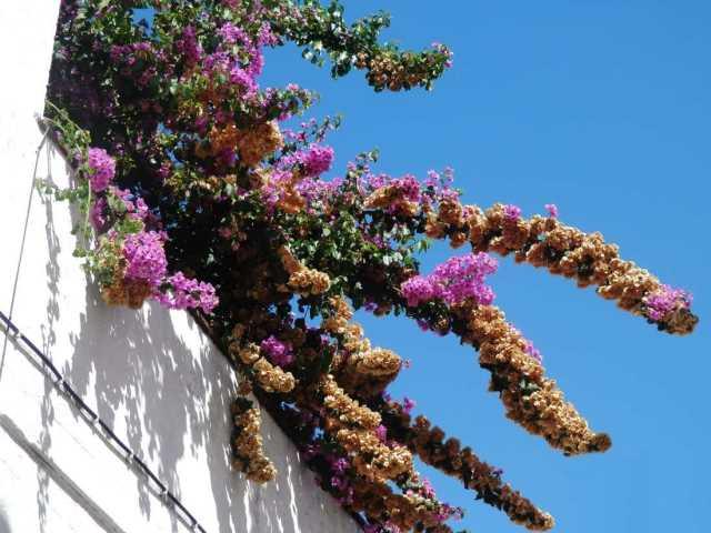 flores casa evora portugal