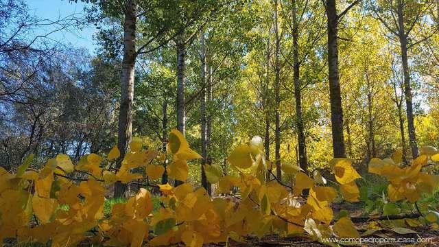 hojas otoño rio alberche escalona